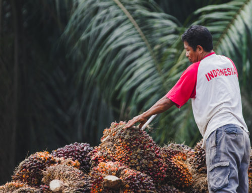 Sustainable Palm Oil planning moves from National to District impact in Indonesia