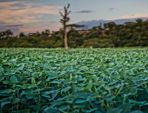 Supporting companies in the responsible sourcing of soy