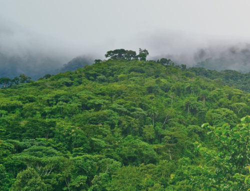 [Front Page Africa] Liberia agriculture ministry launches new program to tackle deforestation