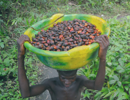 Good Growth Partnership aims to put Liberia's palm oil sector on a sustainable path
