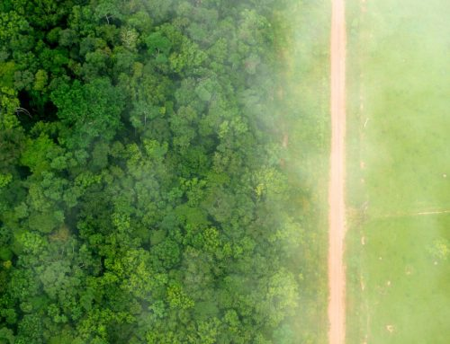 So Many Land Use Change Monitoring Solutions in Support of Deforestation-Free Commodities – Which One to Choose?