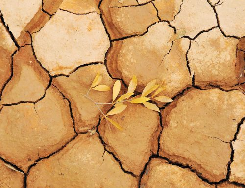 COVID-19 pandemic adds to drought and pricing concerns in the Paraguayan Chaco
