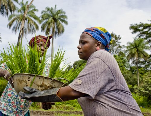 How can companies and governments collaborate better for sustainable agricultural production?